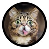 Funny Cats Sticker Pack