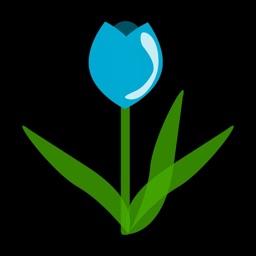 Tulip - Social Polls