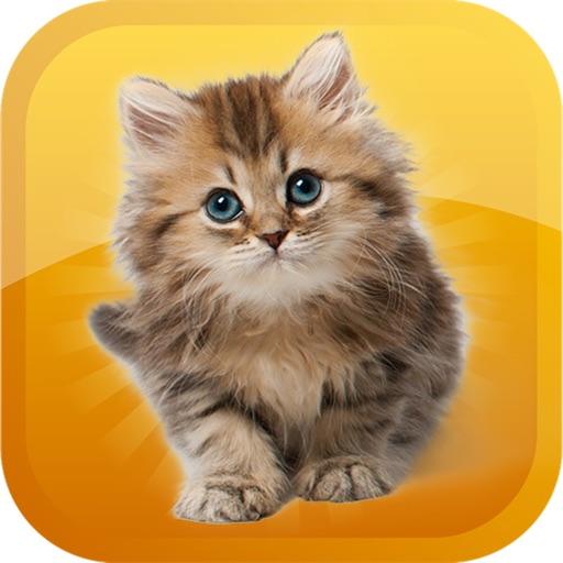 Cat-Emojis Stickers