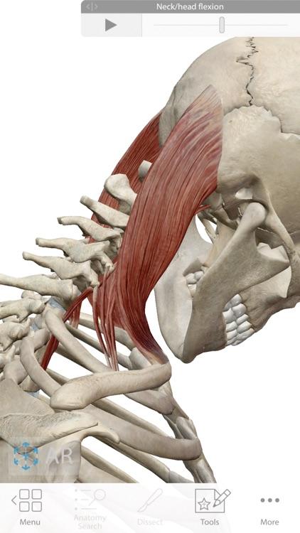 Human Anatomy Atlas 2020 screenshot-7