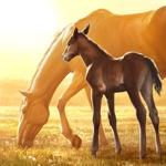Rival Stars Paardenrennen