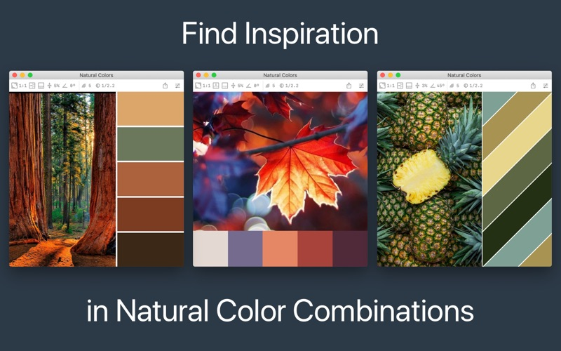 Color Palette From Image review screenshots