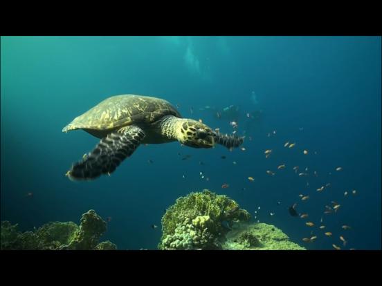 Video Touch - Sea Life screenshot 9