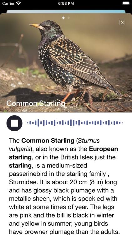 Bird Song/Photo Identification screenshot-5