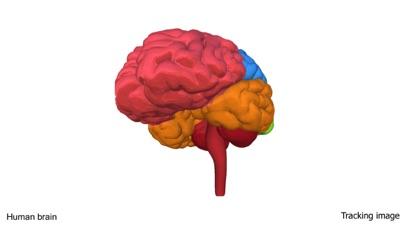 AR Human brain screenshot 2