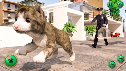 بلدي الحيوانات الأليفة الافترالقطة شاشة1