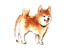 Watercolor Shiba Inu Dog Icon