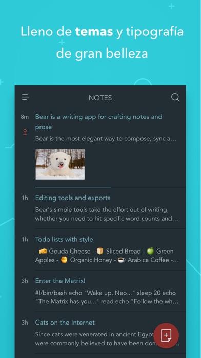 Bear Writer