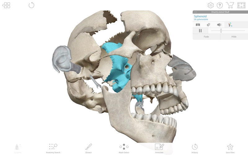 Human Anatomy Atlas 2019 screenshot 2
