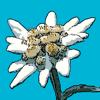 Flora Helvetica Pro deutsch