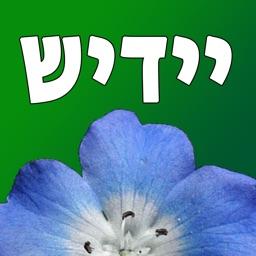Yiddish Quiz Now