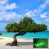 VR Guide to Aruba