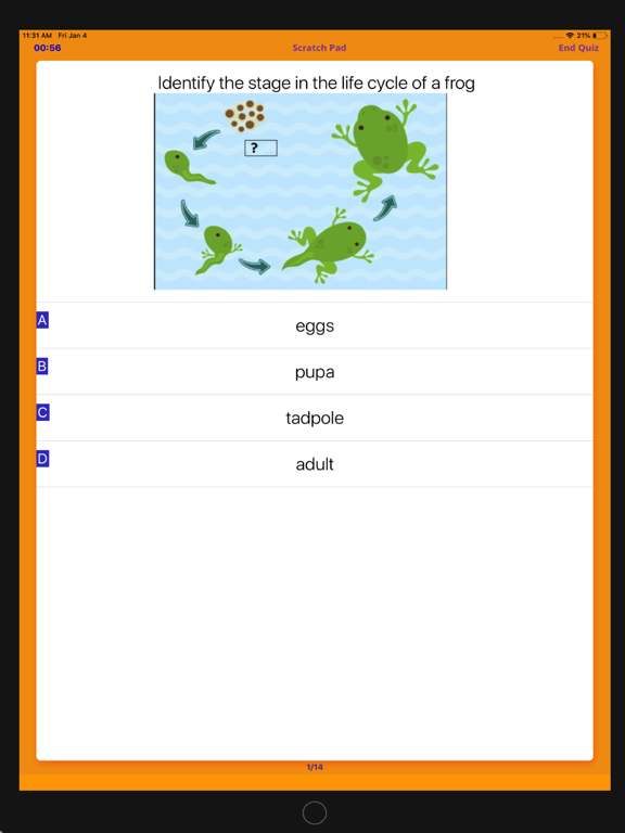 Best Contenders- 1st Grade screenshot 10