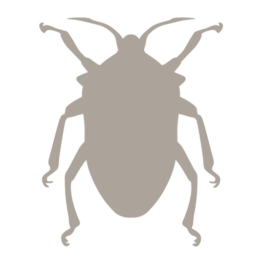 Fieldstone Guide: Insects