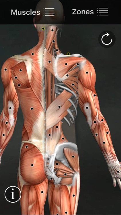 Muscle Trigger Points screenshot-0
