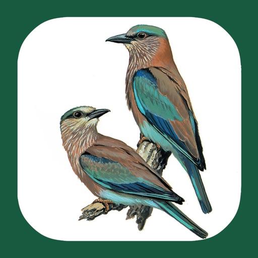 Birds of Western Palearctic
