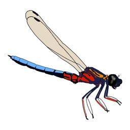 Dragonfly SA