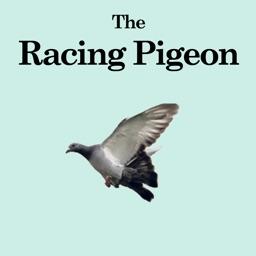The Racing Pigeon