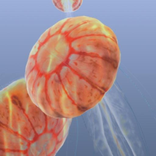 Jellyfish Chrysaora