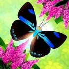 Flutter: Butterfly Sanctuary icon