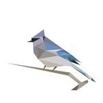 BirdNET pour pc
