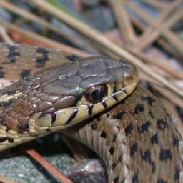 Snakes of North Carolina