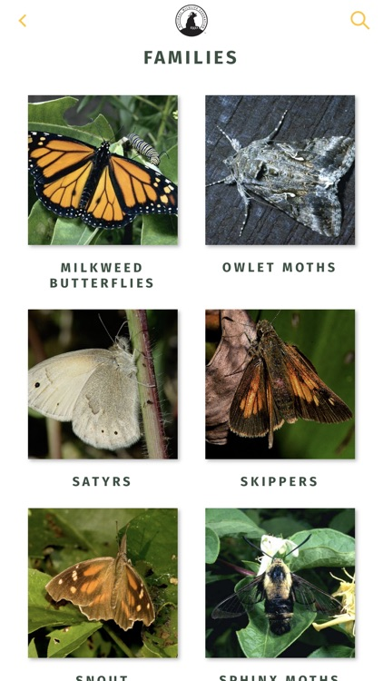 NWF Guide to Butterflies