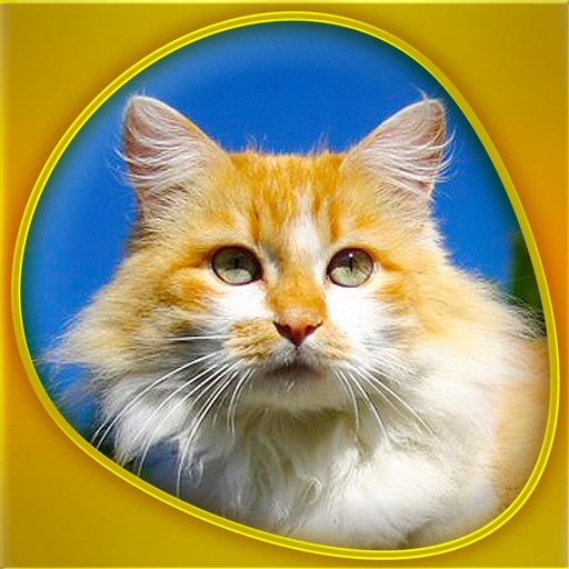 Cats 360 Gold icon