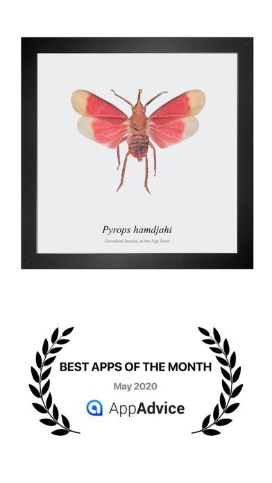 Insecta:のおすすめ画像8