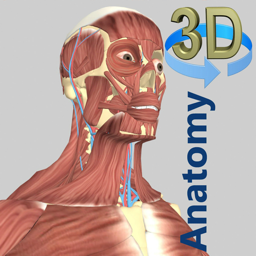 Ícone do app 3D Anatomy