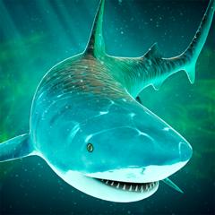 Requin de Mer: Course Aventure