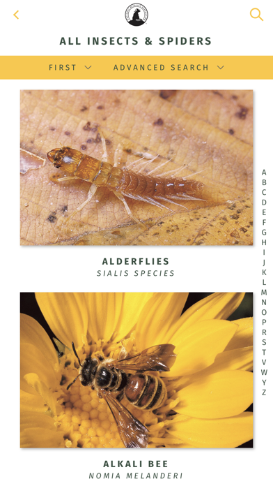 NWF Guide to Insects & Spiders 7