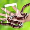 虫子恶搞器 - 蛇屏幕恶作剧