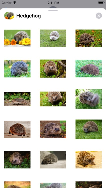 My Hedgehog Stickers
