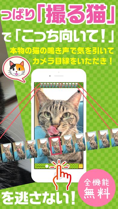 撮る猫のおすすめ画像2
