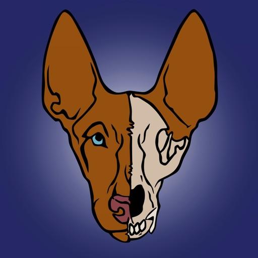 Dog Anatomy