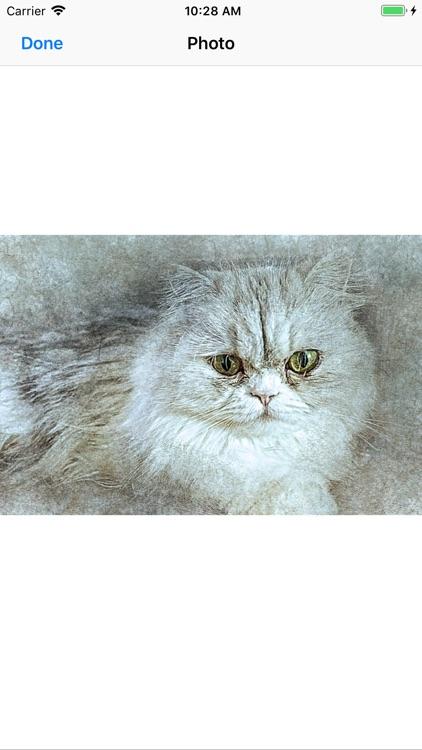 Cat Portraits screenshot-7