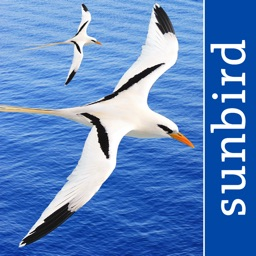 All Birds PR -> Antigua