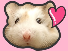 Are you a hamster fan