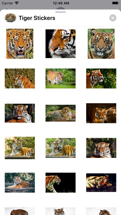 Real Tiger Stickers