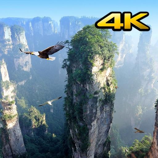Background Videos 4K
