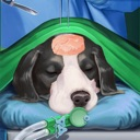Pet Vet Animal Doctor Rescue