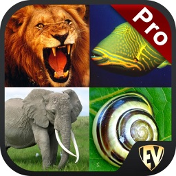 Animals Encyclopedia PRO Guide