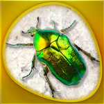 Animals 360 - Insecta Gold