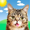 Lil BUB Cat Weather Report - iPhoneアプリ