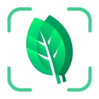 Plant identification - Plants