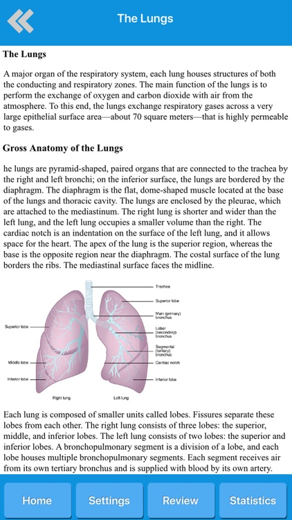 Respiratory System Anatomy screenshot-4