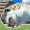 ハリネズミといっしょ - 癒し系放置育成ゲーム - iPhoneアプリ