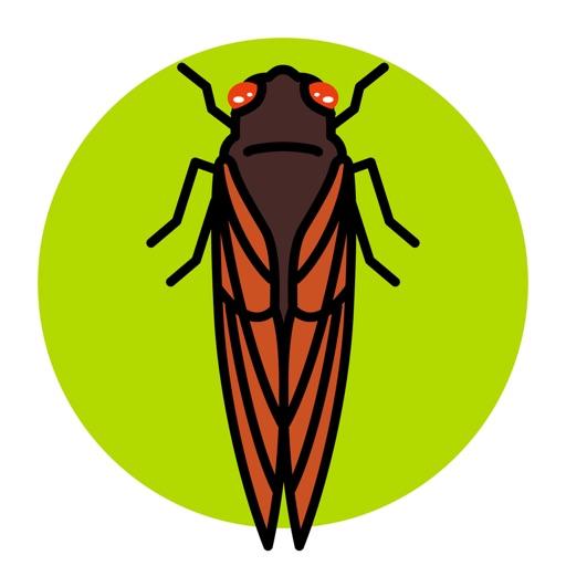 Cicada Safari