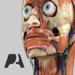 Pocket Anatomy (2018)
